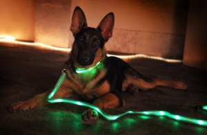 LED-Light-Up-Dog-Leash