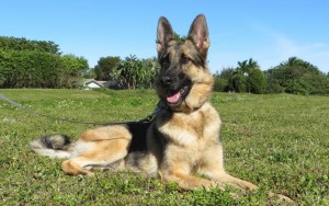 Dog Training Florida